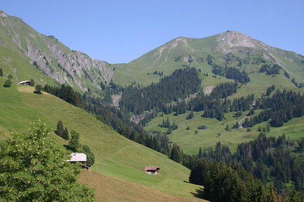 The alpine meadows en route to the Niesen from Frutigen